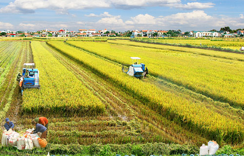 韩国协助越南改善红河平原地区稻米价值链