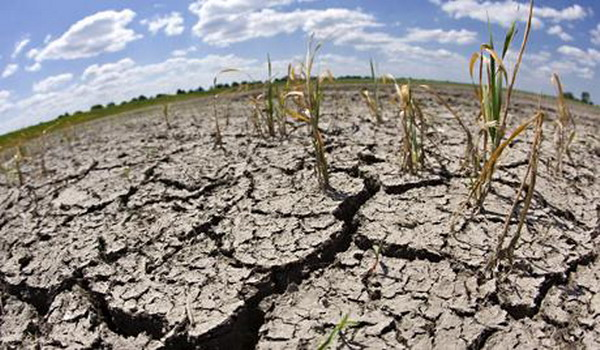 联合国报告指出土地退化会加剧气候变化