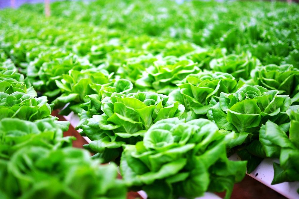 越南-欧洲可持续农业论坛在河内市举行