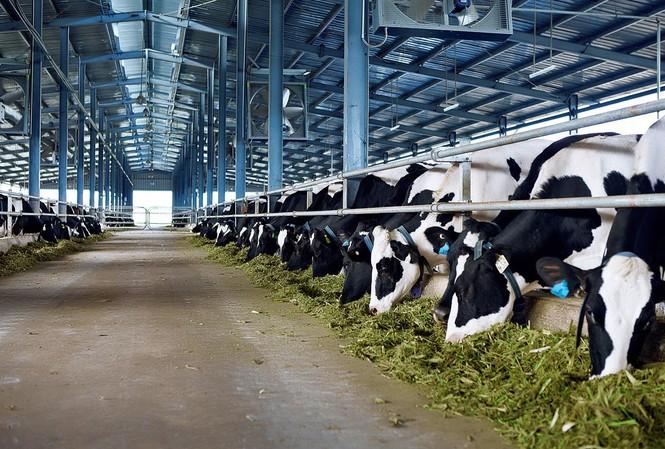 越南企业通过正贸渠道对中国出口牛奶