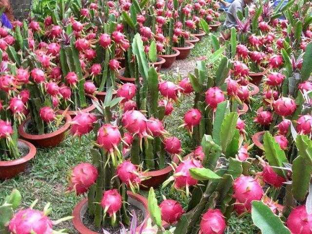 越南和意大利加强合作  促进农产品生产业发展