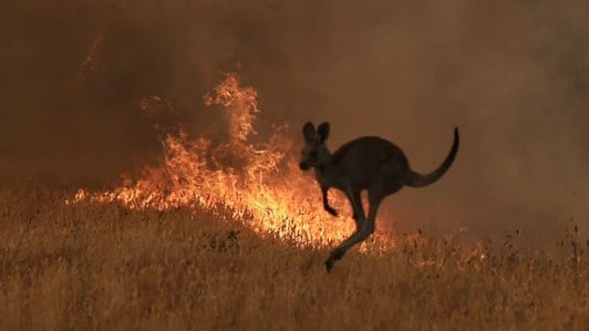 澳大利亚拨款5000万澳元救助遭受该国森林火灾影响的野生动物