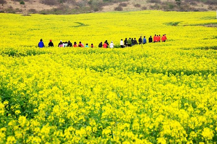 2020年春节越南不可错过的旅游景点