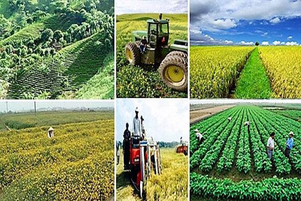鼓励企业全面参与农业生产链  促进农业增长