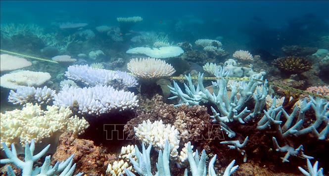 大堡礁出现有记录以来最广泛珊瑚白化现象