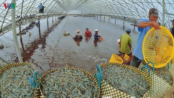 越南对中国虾类出口额5年来猛增