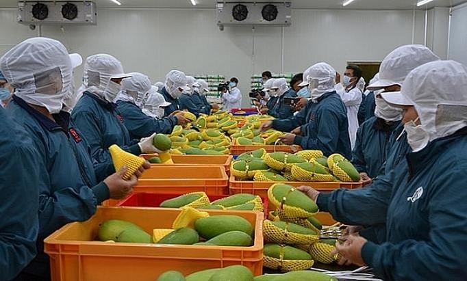 2020年第一季度 越南蔬果出口额达8.31亿美元
