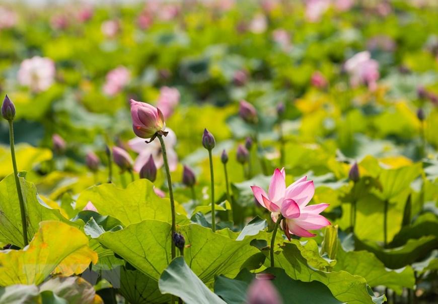 莲花池——胡伯伯故乡的文化旅游亮点