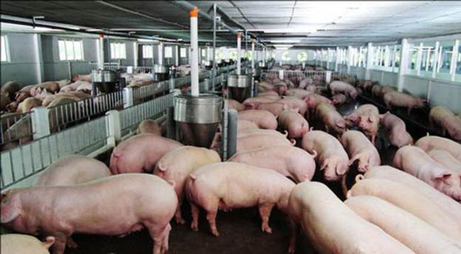 越南首次允许进口生猪以平稳猪肉价格