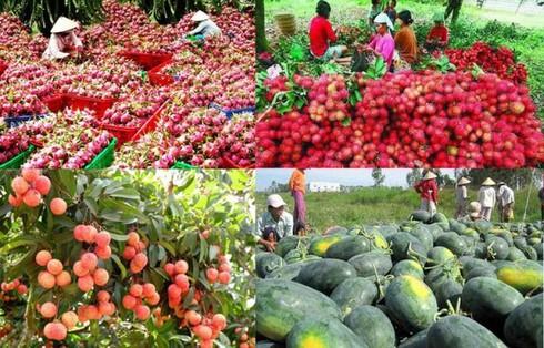 越南与中国继续加强农产品贸易往来