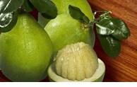 智利将为越南柚子开放市场