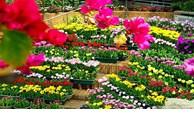 广平省将承办2023年国际花卉节