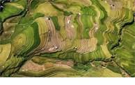 越南作品在印度国际摄影大赛上荣获金奖