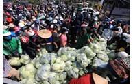 河内市分销系统助力海阳省促进农产品销售
