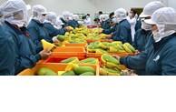 从《越南与欧盟自贸协定》中获益  越南对意大利的农林水产出口表现亮眼