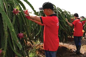 年初两个月越南农林水产品出口额达61.7亿美元