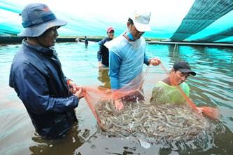 越南有望成为世界第一大虾类生产和加工国