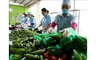 2021年前4个月越南农林水产品出口额增长24%以上