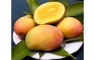 山罗省向中国出口60吨芒果