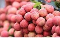 越南工贸部:力促出口农产品原产地证书签发便利化