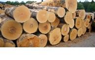非洲继续向越南供应未经加工的木材
