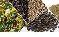 土耳其增加对越南的胡椒进口量