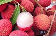 越南40吨新鲜荔枝即将运抵澳大利亚港口