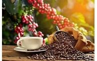 越南是欧盟以外奥地利的第一大咖啡供应市场
