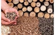 越南成为全球第二大木质颗粒出口国