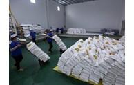 河内市向胡志明市和平阳省捐赠6000吨大米