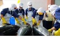 越南成为以色列最大的金枪鱼供应国