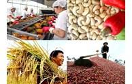 越南企业着力扩大农产品和食品出口市场