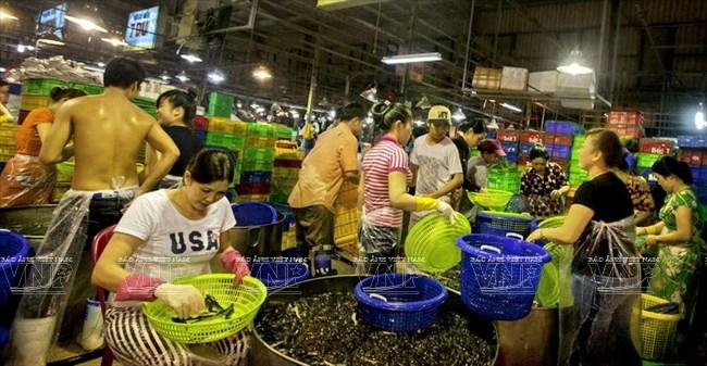 TP Hồ Chí Minh: Hợp tác quốc tế mở rộng chợ đầu mối Bình Điền