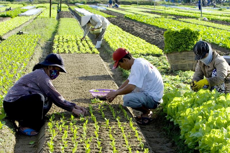 Đào tạo nghề cho khoảng 13.000 lao động nông thôn trong giai đoạn 2017 – 2020