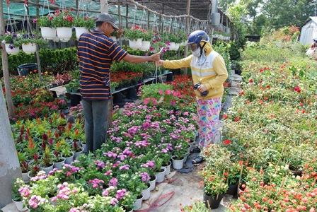 Thoát nghèo, làm giàu từ trồng hoa, cây cảnh