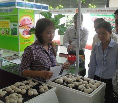7 tháng, TP. Hồ Chí Minh có gần 23 nghìn doanh nghiệp mới thành lập