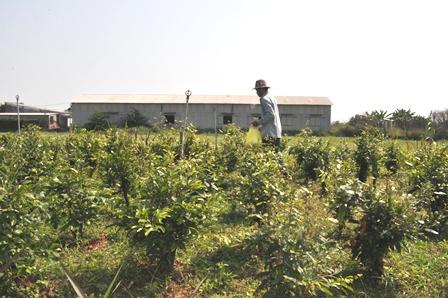 Hiệu quả từ phát triển kinh tế trang trại