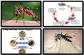 Chủ động phòng, chống các dịch bệnh nguy hiểm