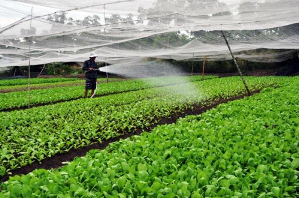 Tập trung nguồn lực phát triển nông nghiệp sạch, nông nghiệp công nghệ cao