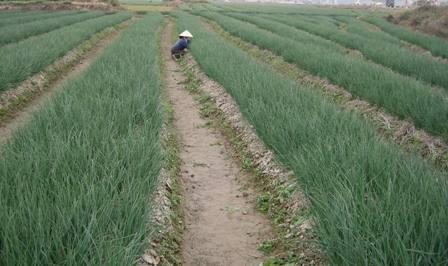TP. Hồ Chí Minh: Năm 2017, giá trị sản xuất nông nghiệp đạt 19.600 tỷ đồng