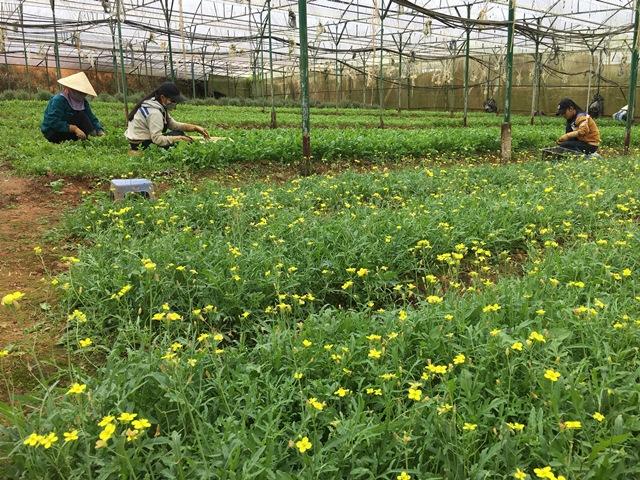 Hỗ trợ lãi vay cho các tổ chức, cá nhân đầu tư vào lĩnh vực nông nghiệp