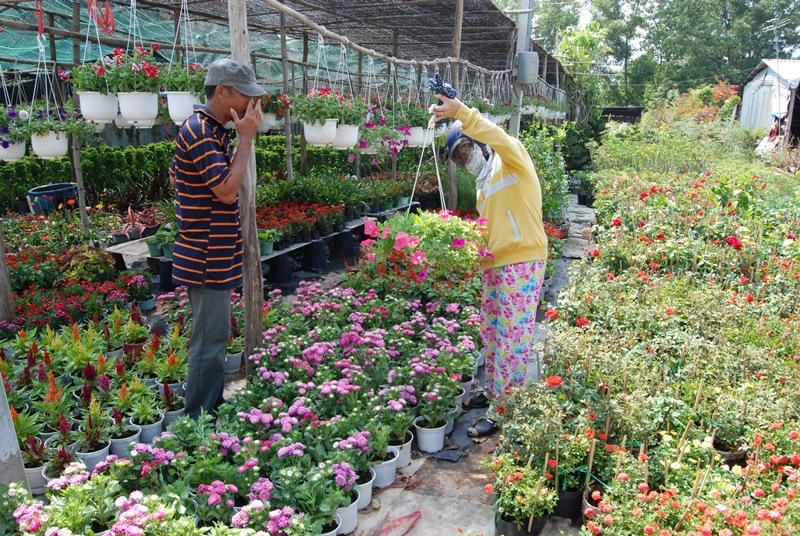 Đẩy mạnh sản xuất nông nghiệp ứng dụng công nghệ cao