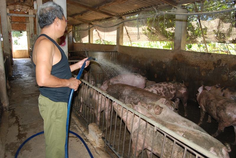 Chủ động ứng phó với bệnh dịch tả lợn châu Phi