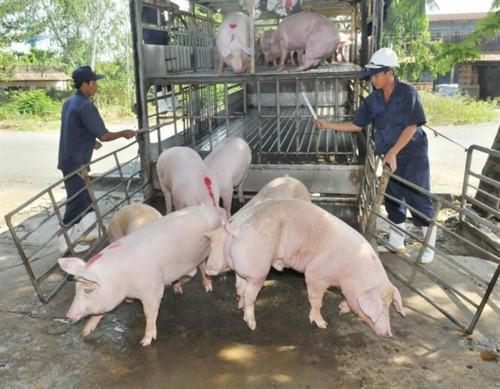 Nỗ lực phòng, chống dịch tả lợn Châu Phi