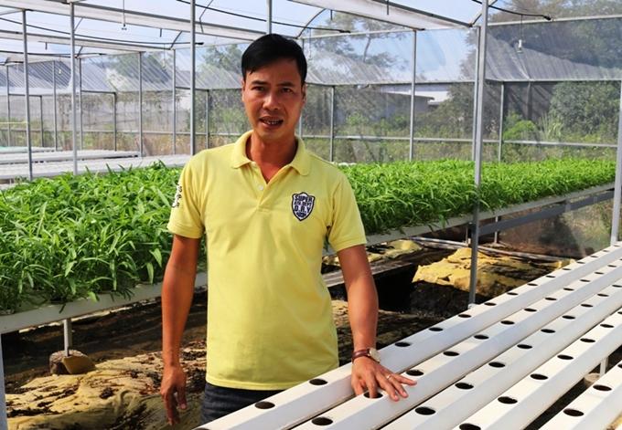 Hiệu quả từ mô hình trồng rau thủy canh