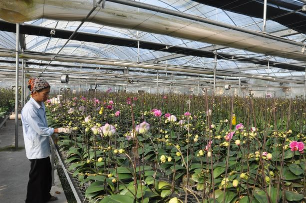 Những tín hiệu tích cực trong phát triển nông nghiệp ứng dụng công nghệ cao