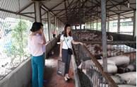 Bắc Ninh đẩy mạnh phát triển kinh tế trang trại