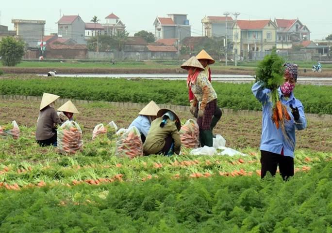 Đảng bộ xã Lai Hạ chú trọng lãnh đạo nhân dân phát triển kinh tế