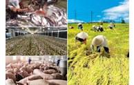 Đẩy mạnh sản xuất, đảm bảo mục tiêu, kế hoạch tăng trưởng của ngành nông nghiệp