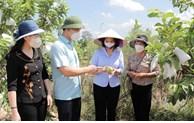 Thăm mô hình sản xuất nông nghiệp tiêu biểu tại huyện Gia Bình